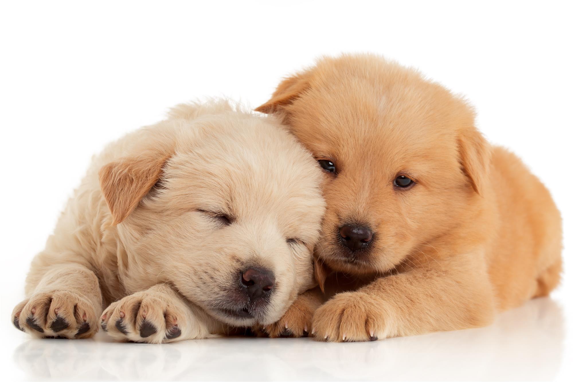 Pet Doors For Dogs