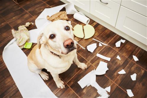 Benefits Of Indoor Dog Gates Australiapetdoors