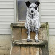 How to Keep Other Animals from Using Your Dog Door