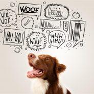 Translating Different Dog Barks