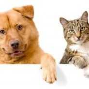 Helping Your Pet Lose Weight