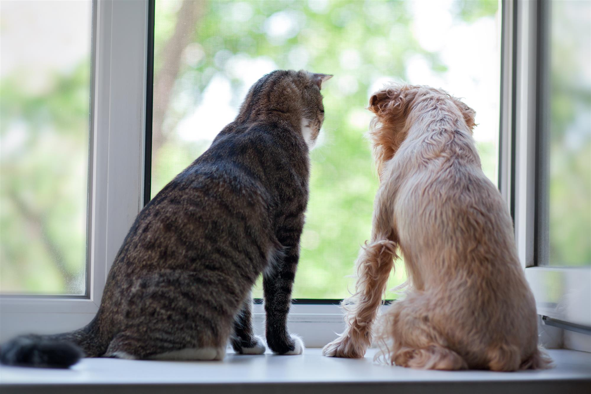 Can Cats And Dogs Get Along Australiapetdoors Com Au