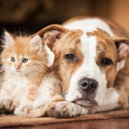 How to Help Your Pet with a Stomach Ache