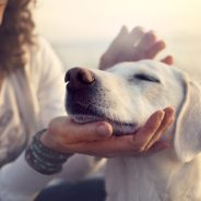 Can Dogs and Cats Get Depressed?