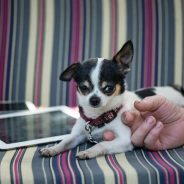 How Technology Is Revolutionizing Owning a Pet