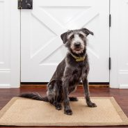 3 Pet Door Myths: Here's the Truth
