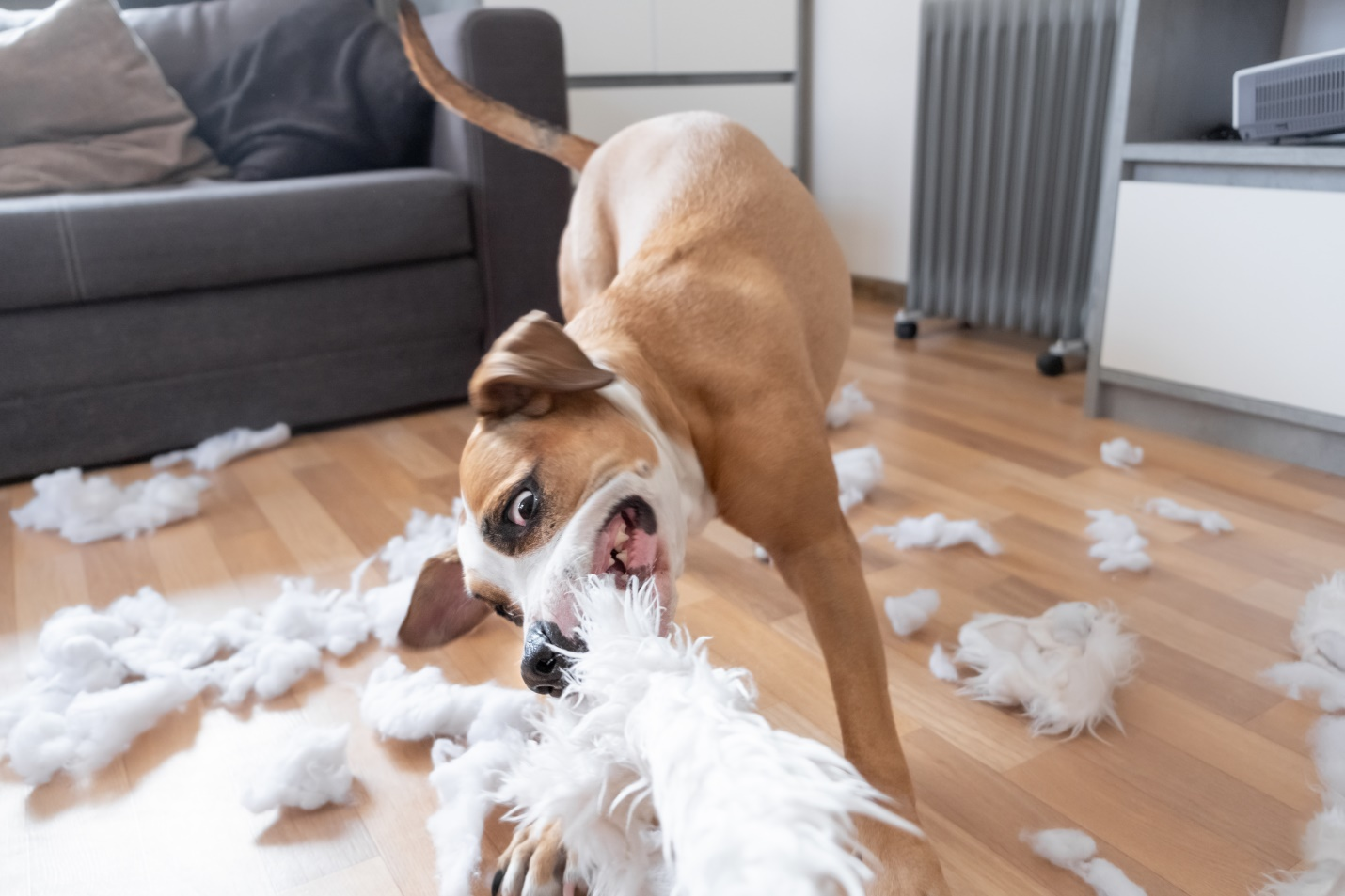 Funny Playful Dog Destroying A Fluffy Pillow At Home